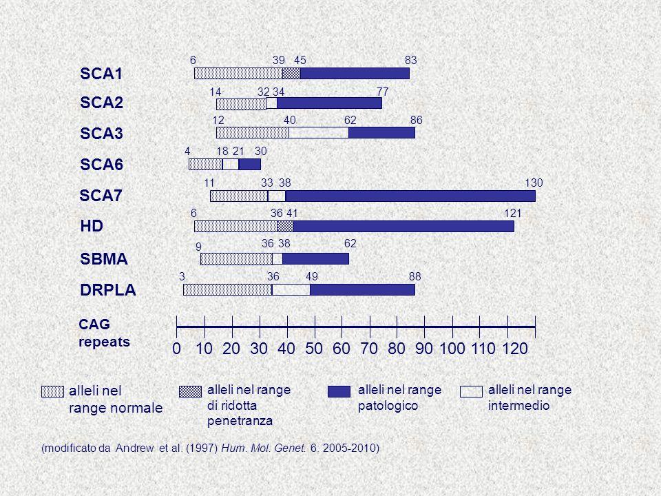 SCA1 SCA2 SCA3 SCA6 SCA7 HD SBMA DRPLA