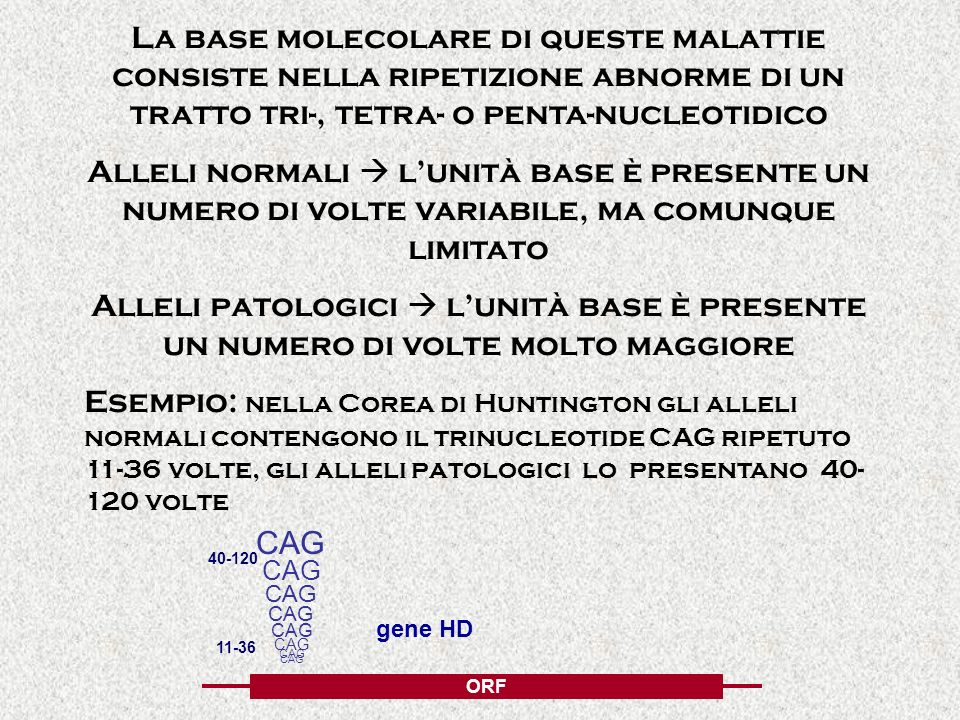 La base molecolare di queste malattie consiste nella ripetizione abnorme di un tratto tri-, tetra- o penta-nucleotidico