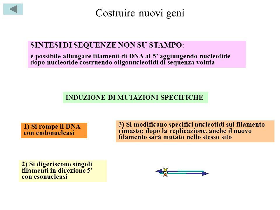 Costruire nuovi geni SINTESI DI SEQUENZE NON SU STAMPO: