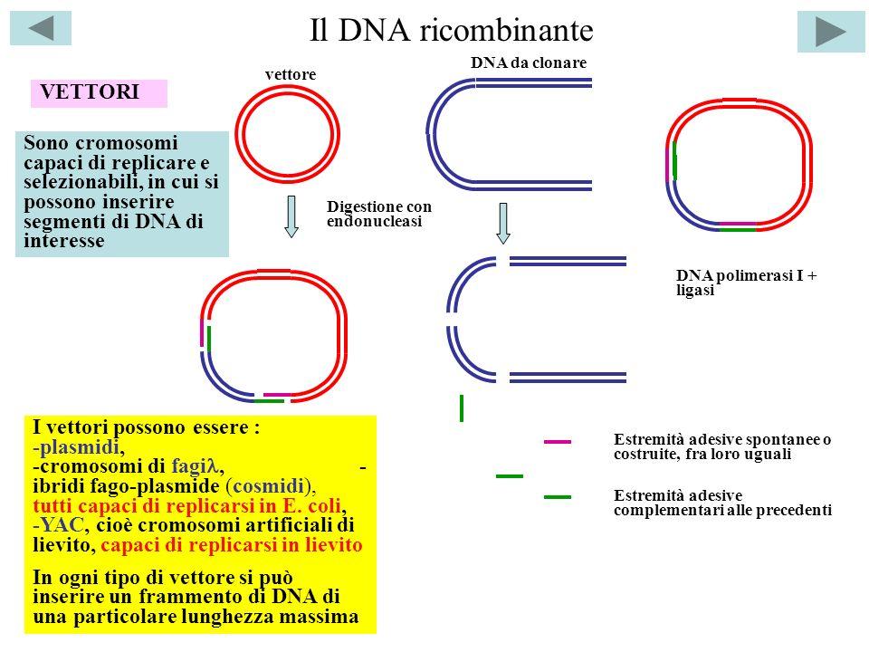 Il DNA ricombinante VETTORI