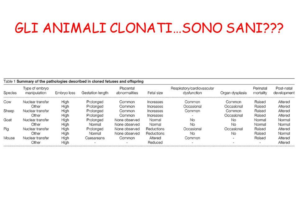 GLI ANIMALI CLONATI…SONO SANI
