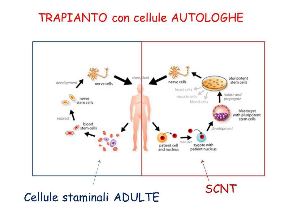 TRAPIANTO con cellule AUTOLOGHE