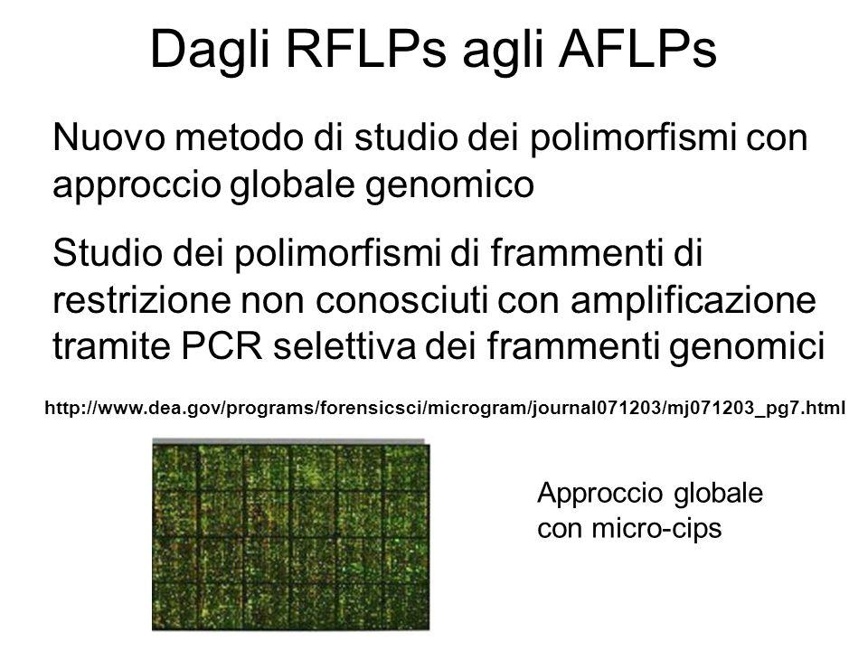 Dagli RFLPs agli AFLPsNuovo metodo di studio dei polimorfismi con approccio globale genomico.