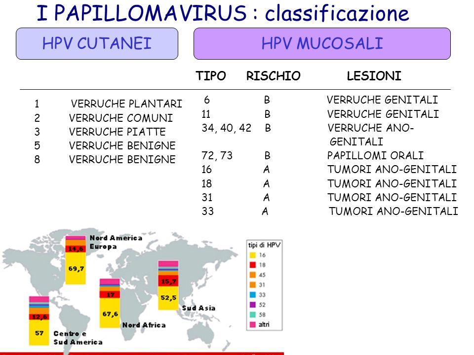 I PAPILLOMAVIRUS : classificazione