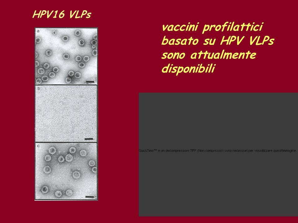 basato su HPV VLPs sono attualmente disponibili
