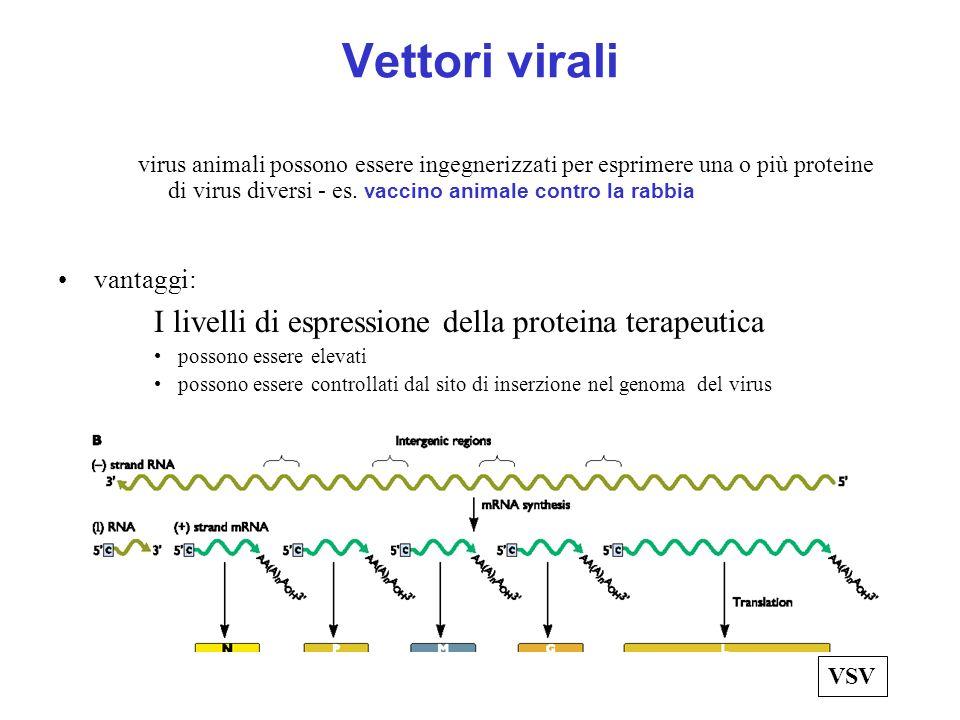 Vettori virali I livelli di espressione della proteina terapeutica
