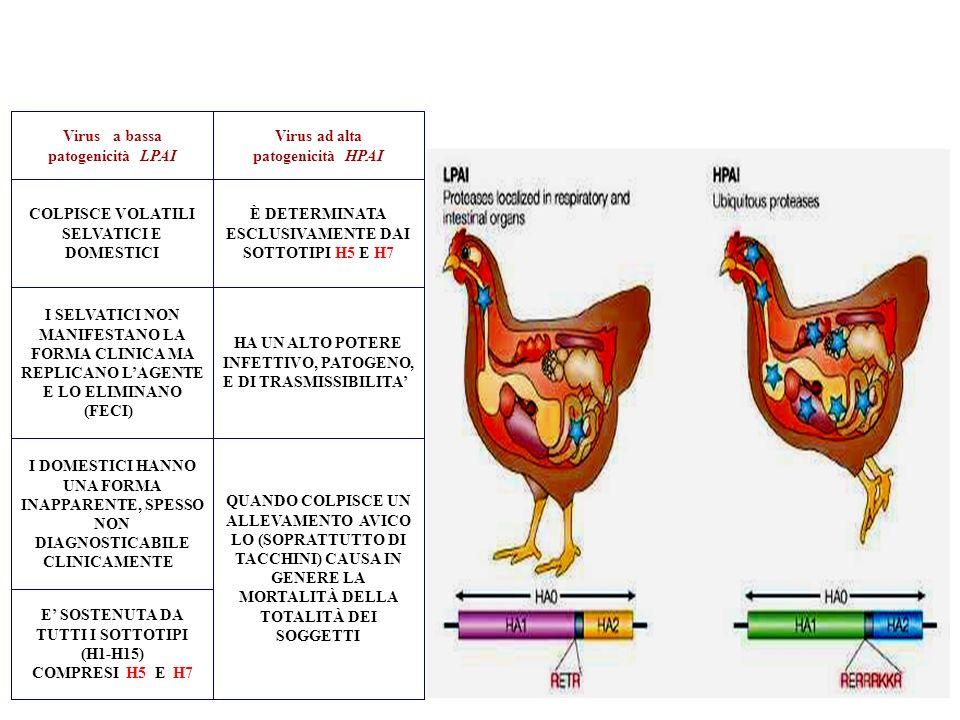 E' SOSTENUTA DA TUTTI I SOTTOTIPI (H1-H15) COMPRESI H5 E H7