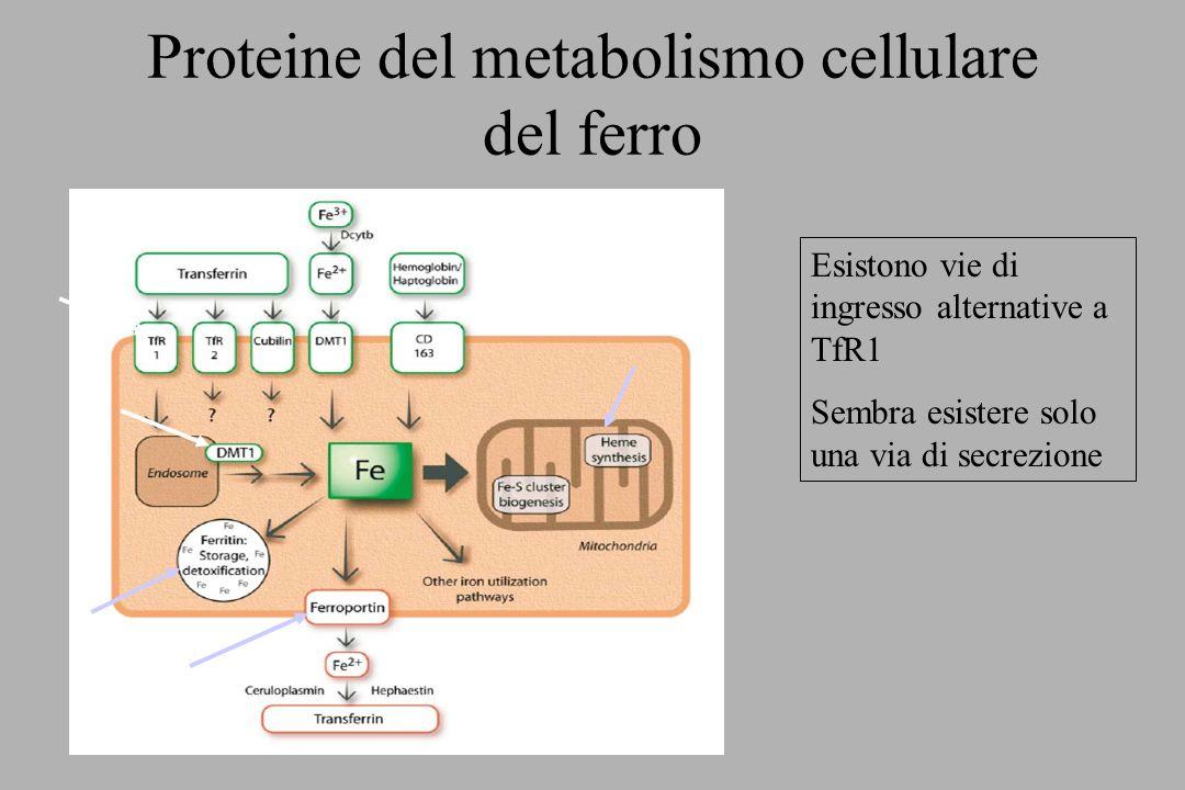 Proteine del metabolismo cellulare del ferro