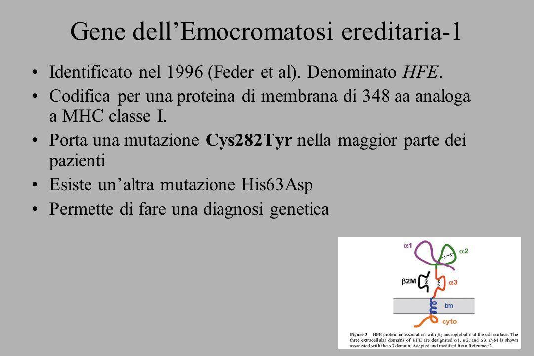 Gene dell'Emocromatosi ereditaria-1
