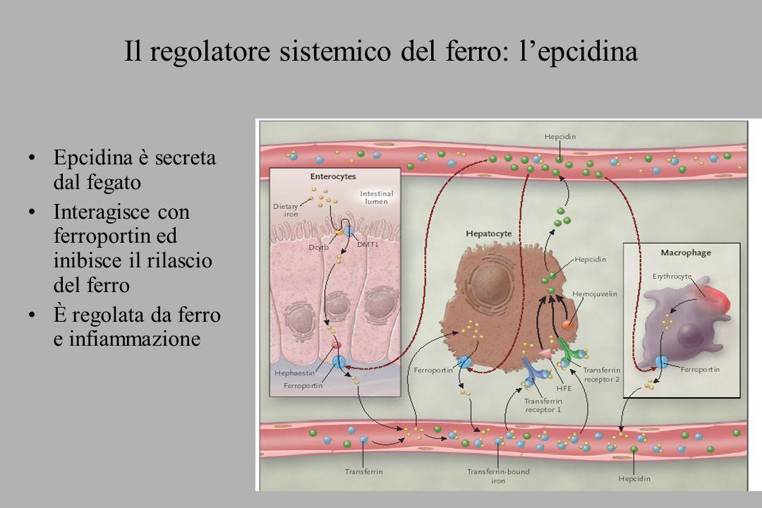 Il regolatore sistemico del ferro: l'epcidina