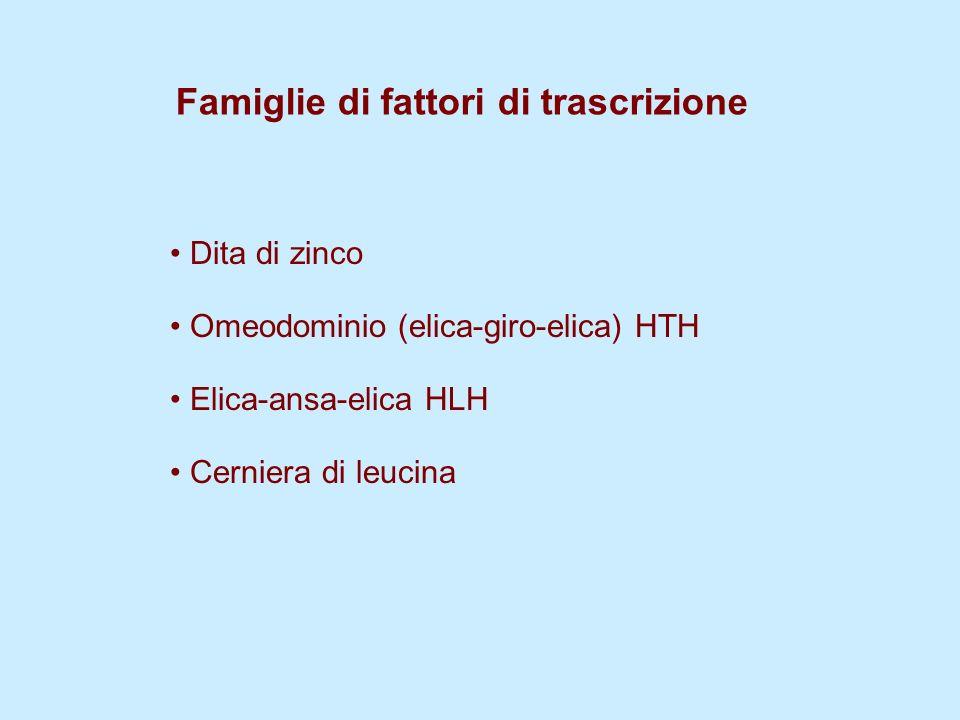 Famiglie di fattori di trascrizione