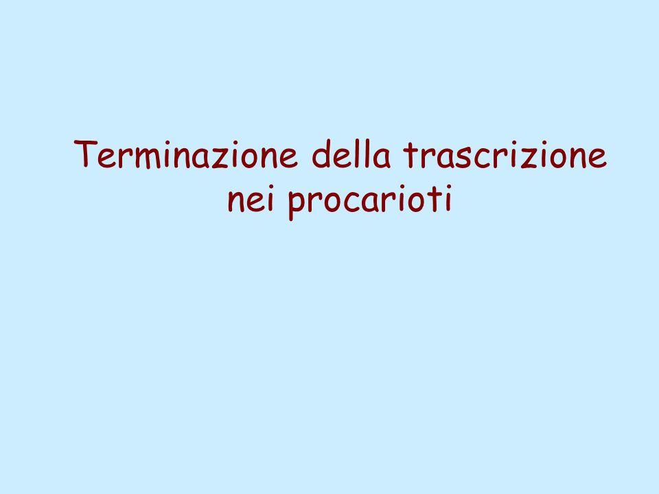 Terminazione della trascrizione