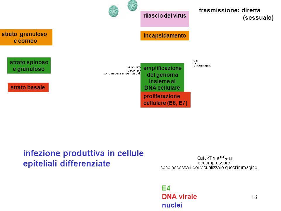 amplificazione del genoma insieme al DNA cellulare