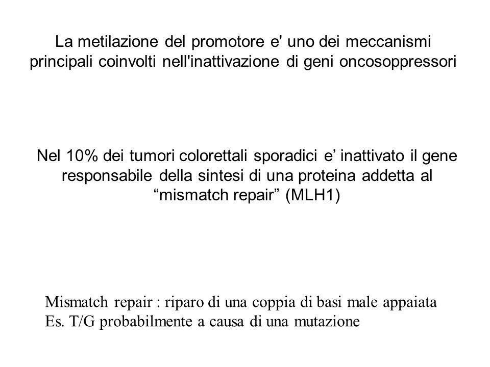 La metilazione del promotore e uno dei meccanismi principali coinvolti nell inattivazione di geni oncosoppressori