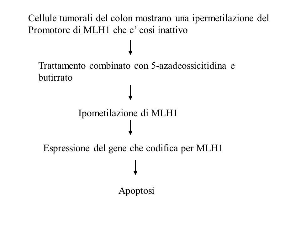 Cellule tumorali del colon mostrano una ipermetilazione del