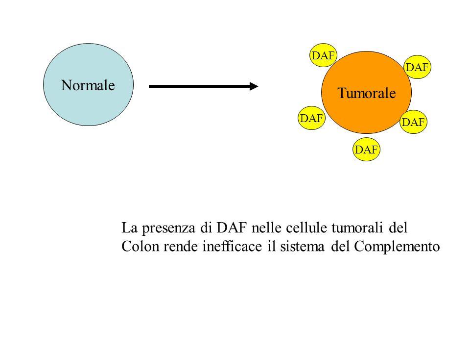 La presenza di DAF nelle cellule tumorali del