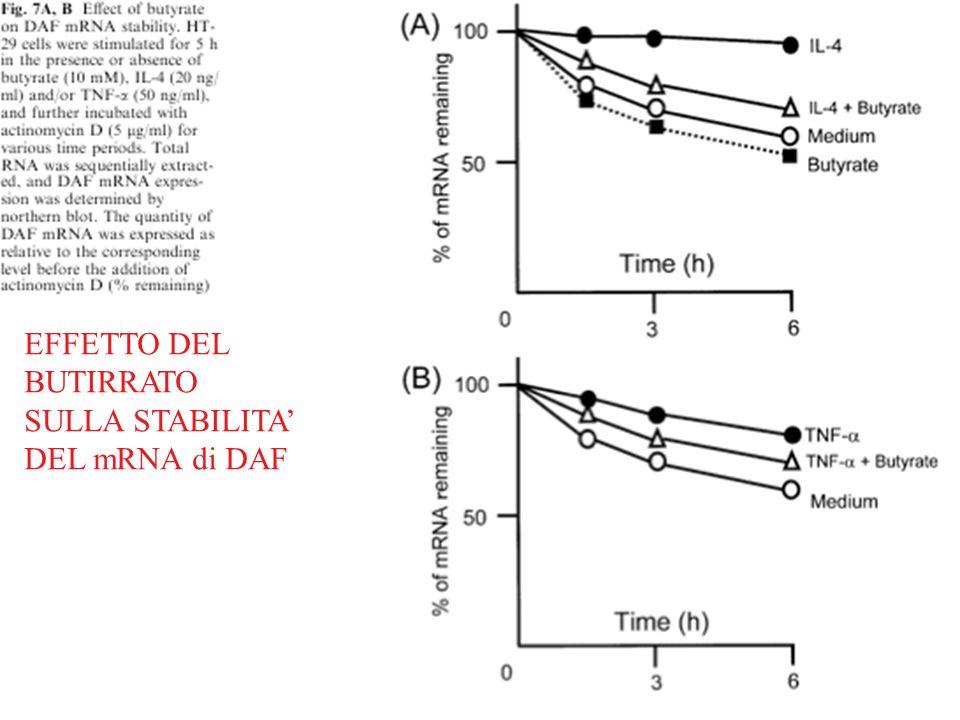 EFFETTO DEL BUTIRRATO SULLA STABILITA' DEL mRNA di DAF