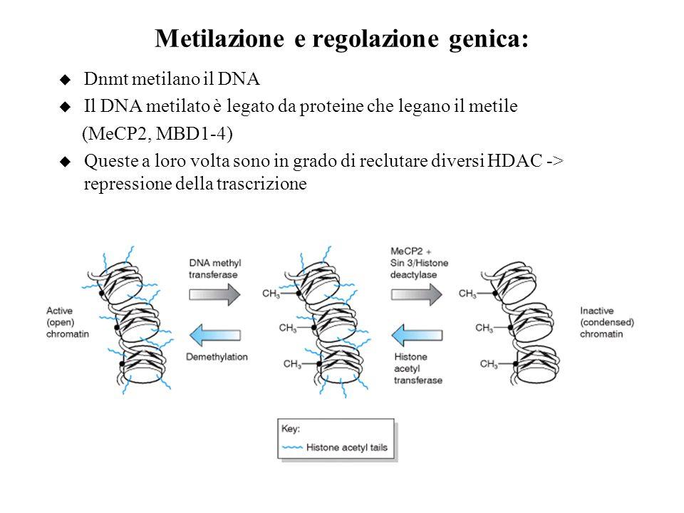 Metilazione e regolazione genica: