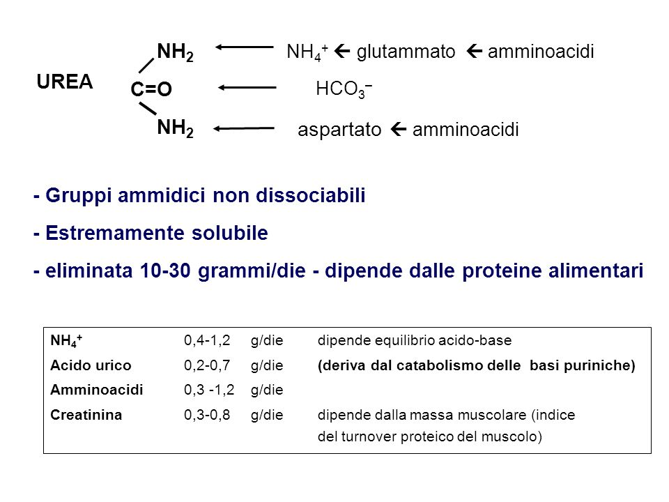 aspartato  amminoacidi UREA