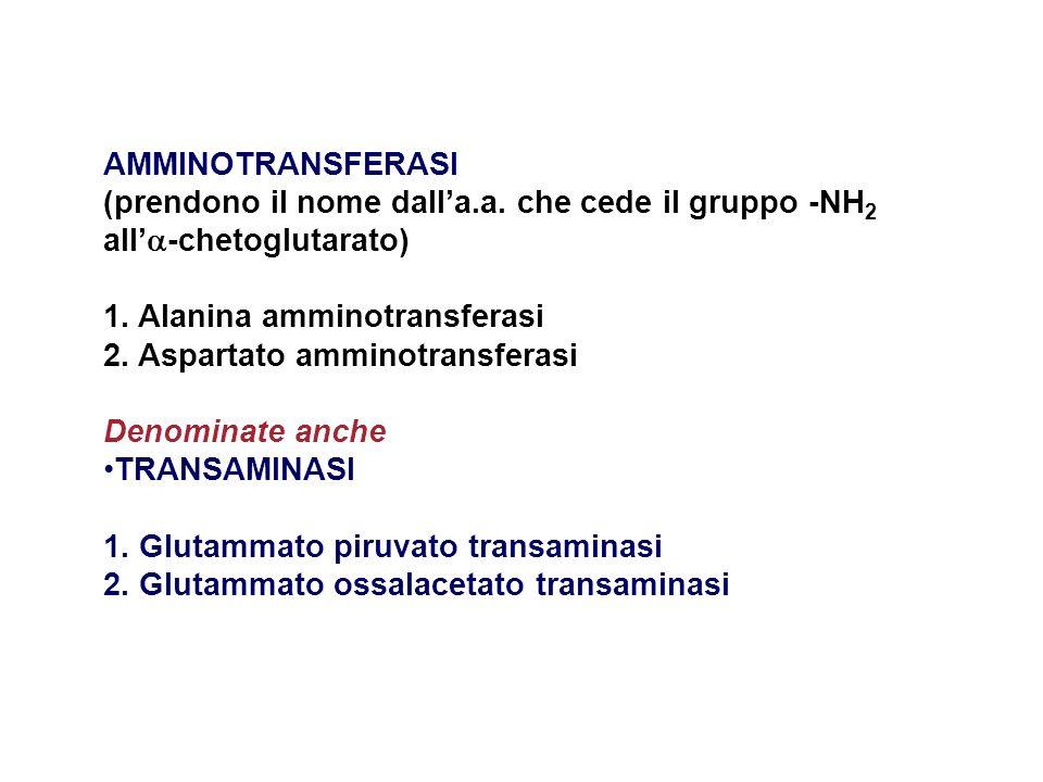 AMMINOTRANSFERASI (prendono il nome dall'a.a. che cede il gruppo -NH2 all'-chetoglutarato) 1. Alanina amminotransferasi.