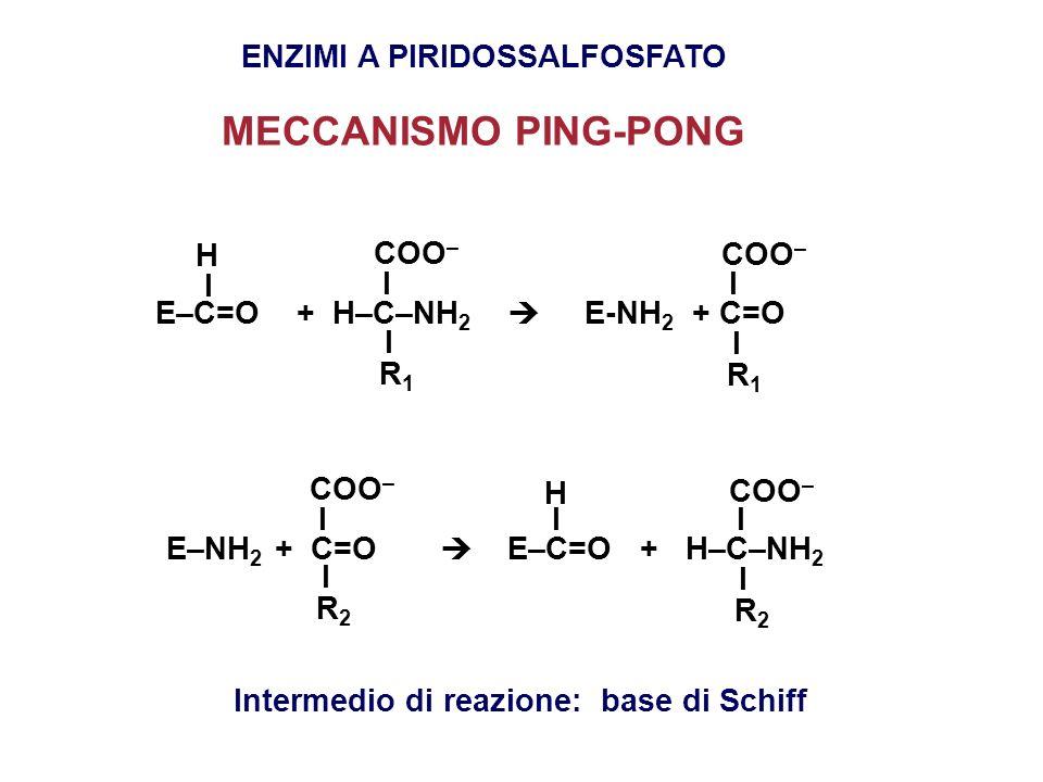 ENZIMI A PIRIDOSSALFOSFATO Intermedio di reazione: base di Schiff