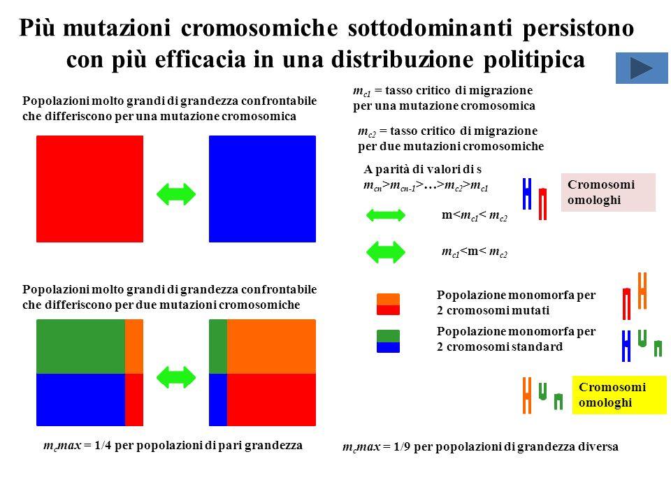 Più mutazioni cromosomiche sottodominanti persistono con più efficacia in una distribuzione politipica