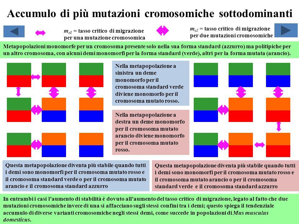 Accumulo di più mutazioni cromosomiche sottodominanti