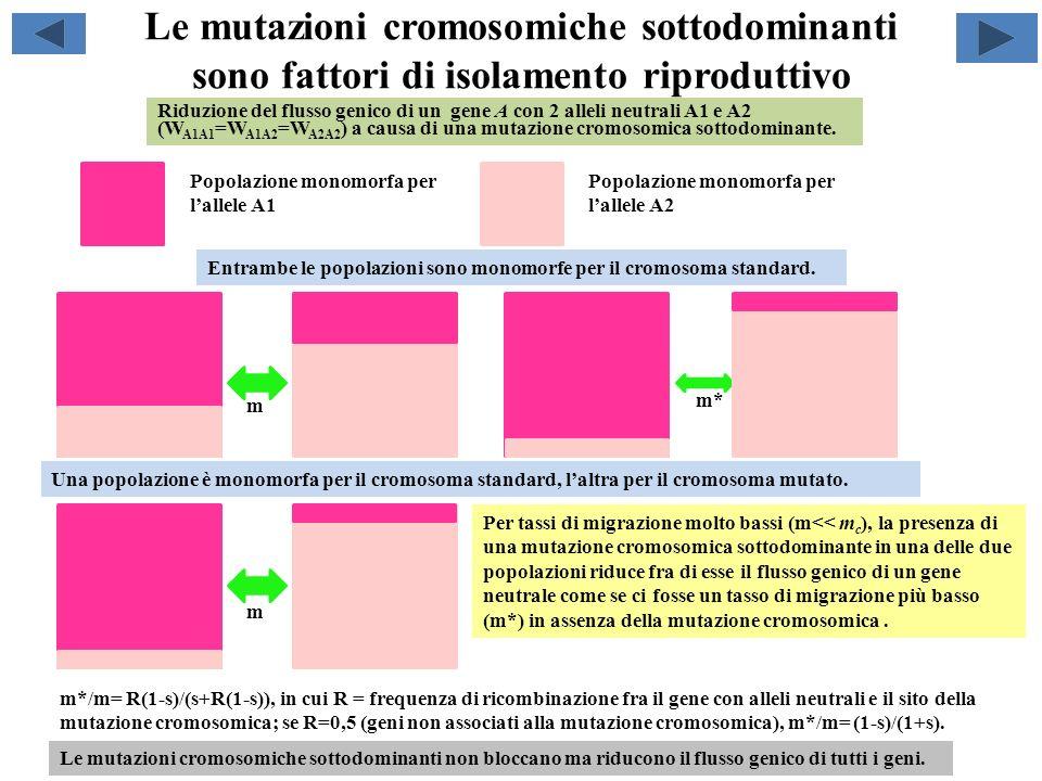 Le mutazioni cromosomiche sottodominanti sono fattori di isolamento riproduttivo