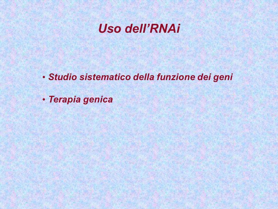 Uso dell'RNAi Studio sistematico della funzione dei geni