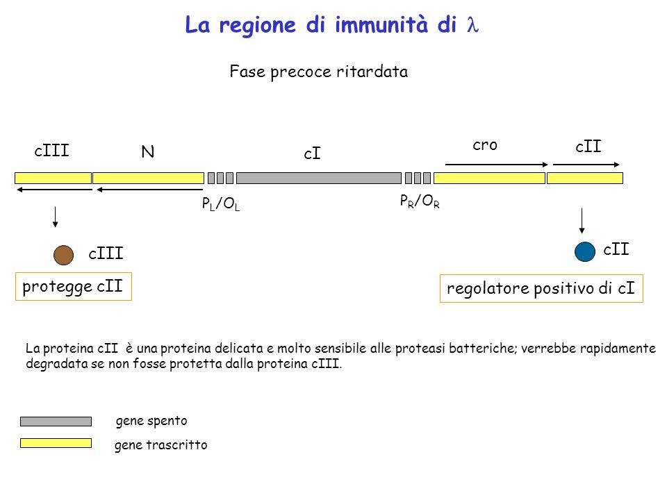 La regione di immunità di l