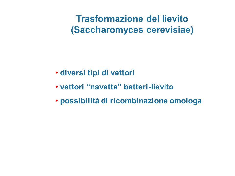 Trasformazione del lievito (Saccharomyces cerevisiae)