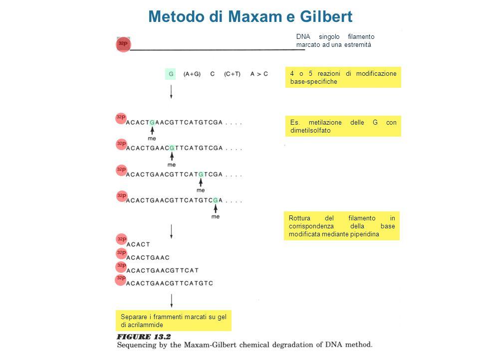Metodo di Maxam e Gilbert