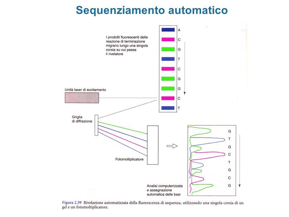 Sequenziamento automatico