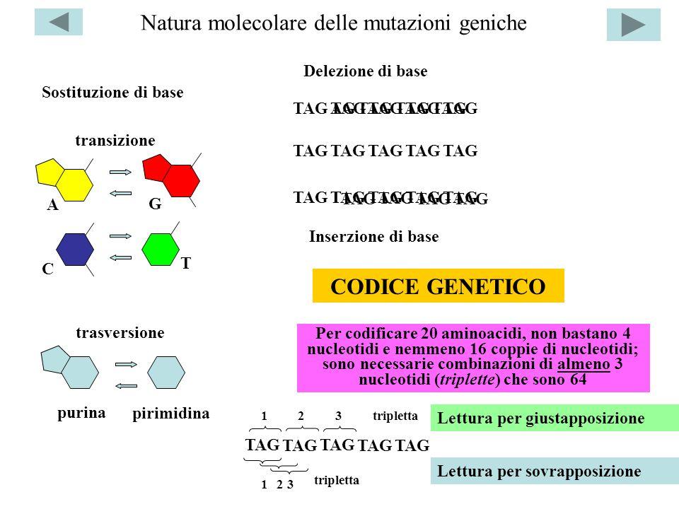 Natura molecolare delle mutazioni geniche