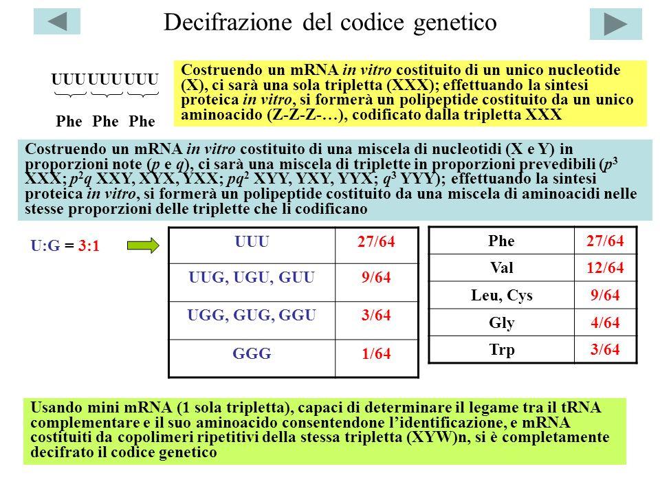 Decifrazione del codice genetico