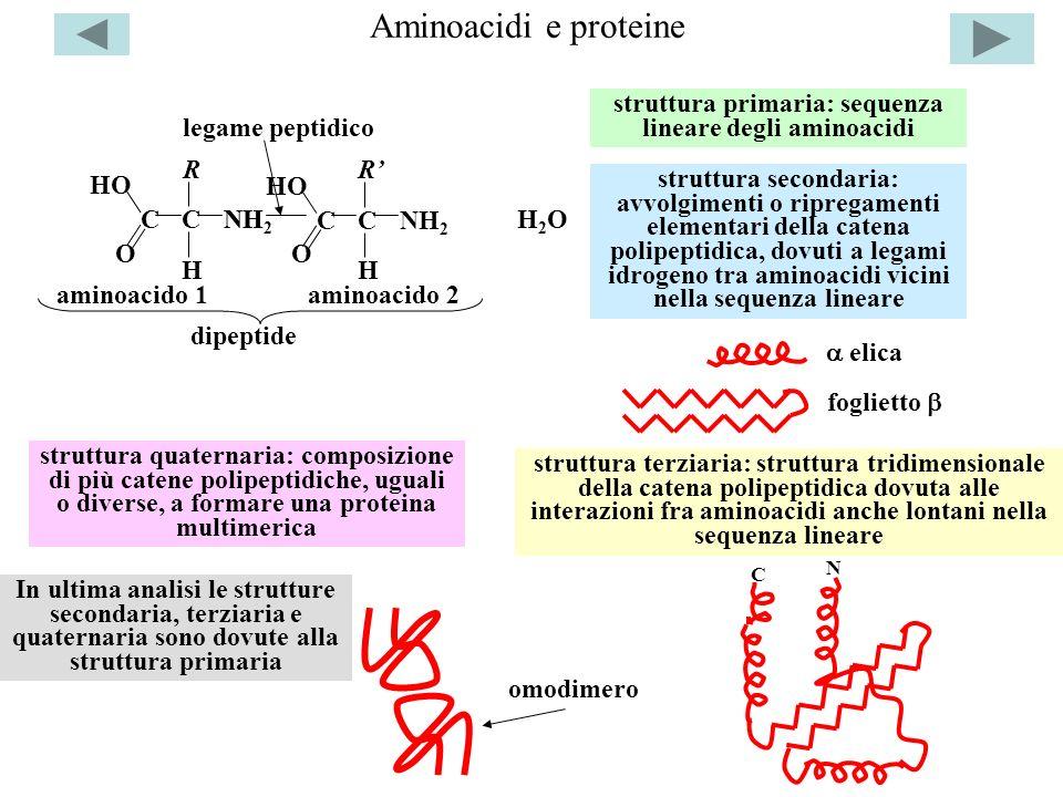 struttura primaria: sequenza lineare degli aminoacidi