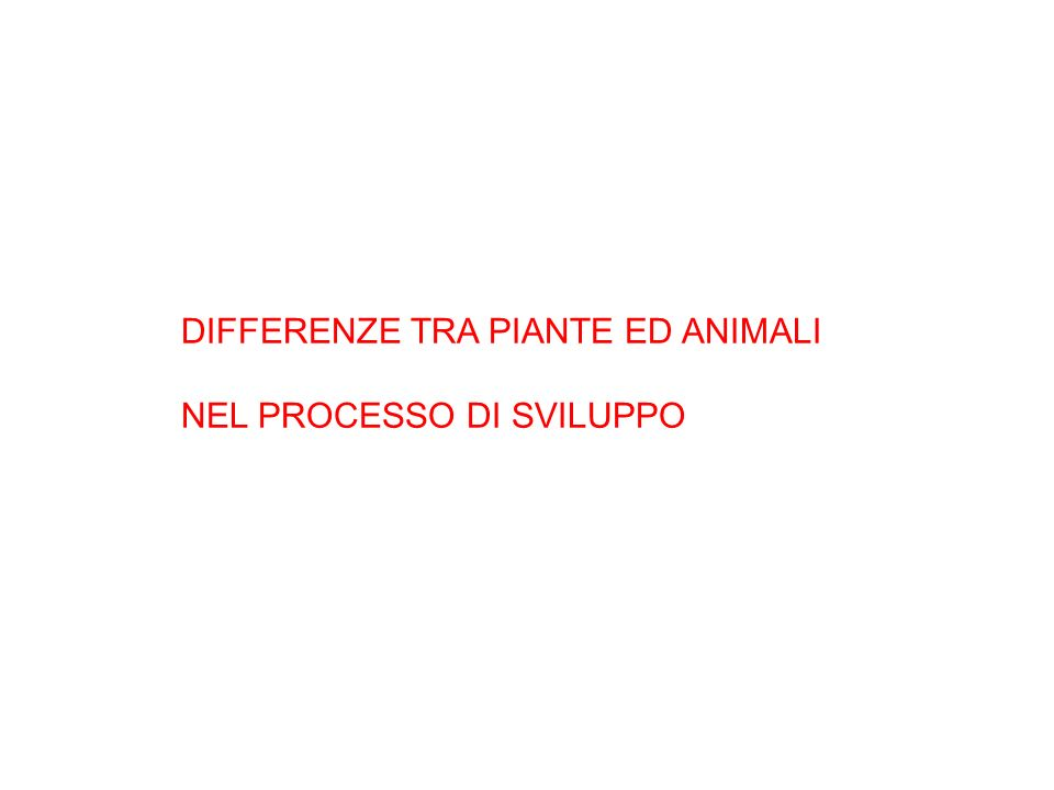 DIFFERENZE TRA PIANTE ED ANIMALI
