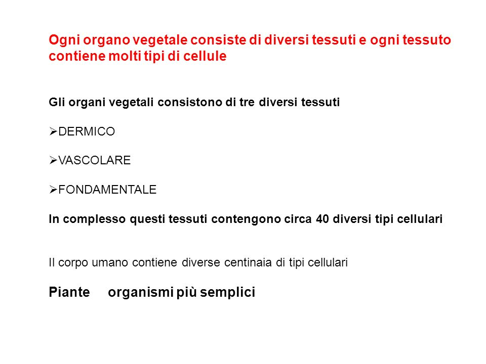 Ogni organo vegetale consiste di diversi tessuti e ogni tessuto