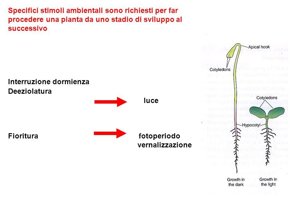 Specifici stimoli ambientali sono richiesti per far procedere una pianta da uno stadio di sviluppo al successivo