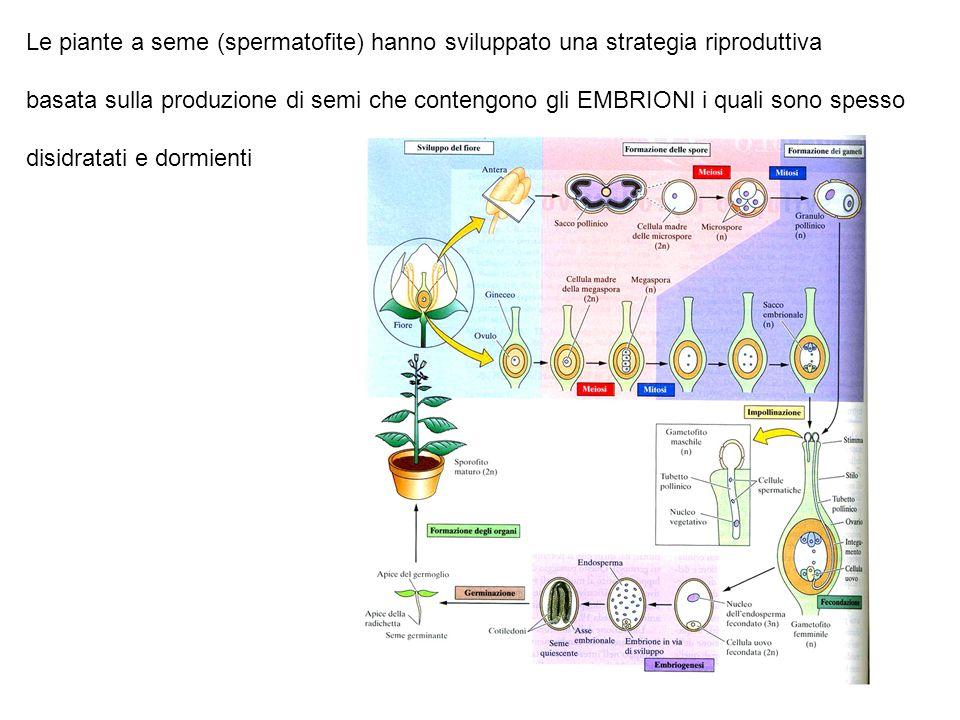 Le piante a seme (spermatofite) hanno sviluppato una strategia riproduttiva