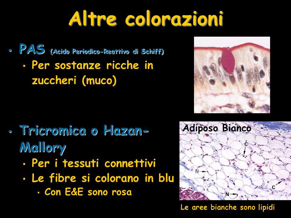 Altre colorazioni PAS (Acido Periodico-Reattivo di Schiff)