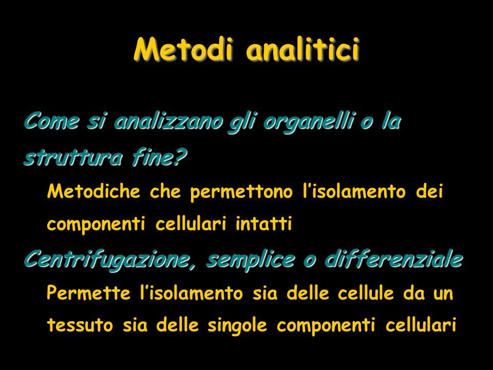 Metodi analitici Come si analizzano gli organelli o la struttura fine