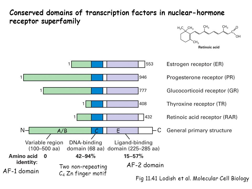 Conserved domains of transcription factors in nuclear-hormone
