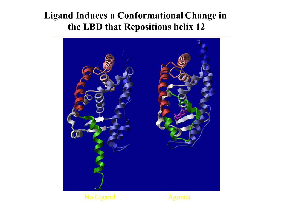 Ligand Induces a Conformational Change in