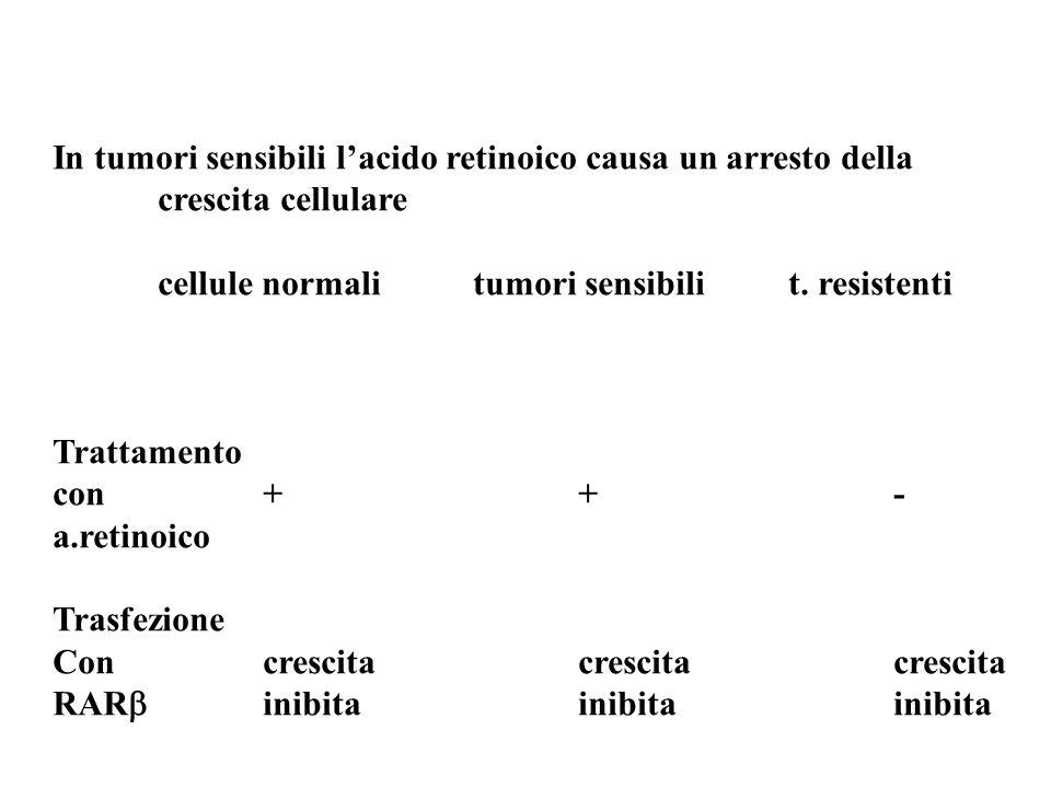 In tumori sensibili l'acido retinoico causa un arresto della