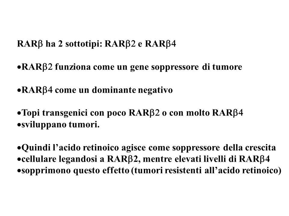RARb ha 2 sottotipi: RARb2 e RARb4