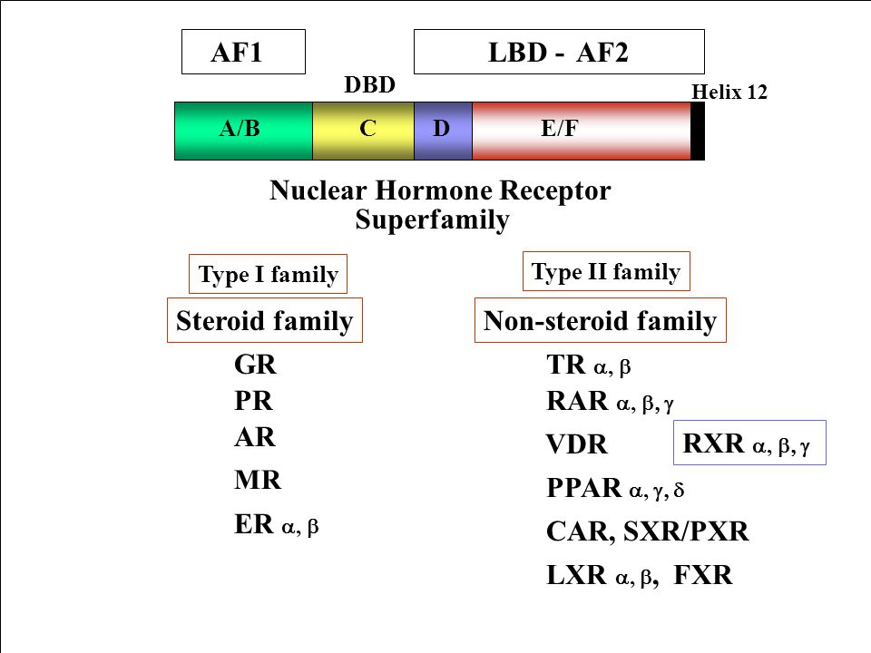 Nuclear Hormone Receptor Superfamily