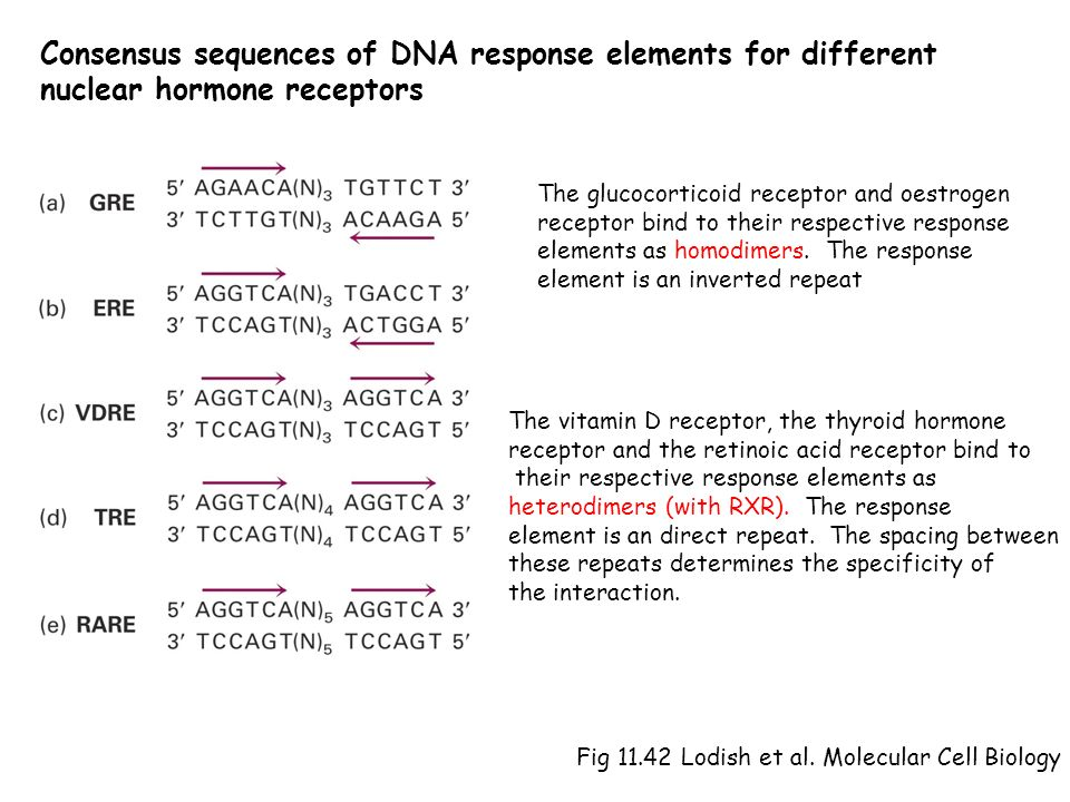 Consensus sequences of DNA response elements for different