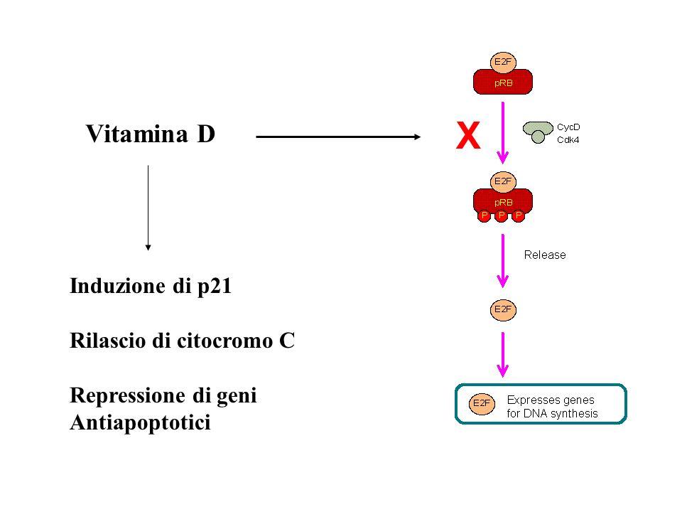 X Vitamina D Induzione di p21 Rilascio di citocromo C
