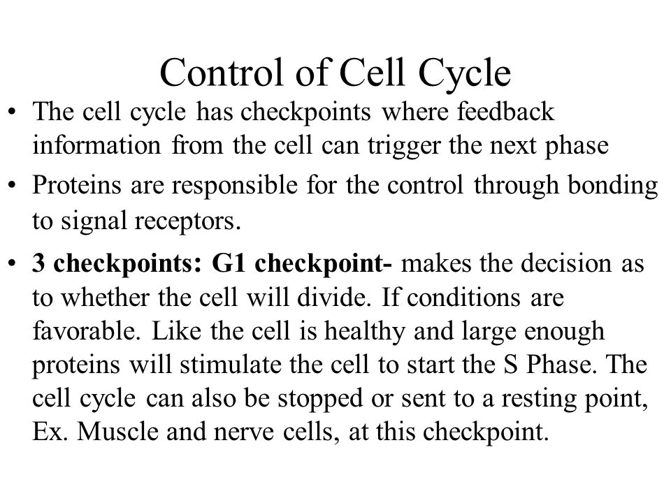 Control of Cell Cycle The cell cycle has checkpoints where feedback information from the cell can trigger the next phase.